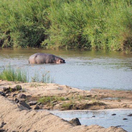 Buckler's Africa: photo2.jpg