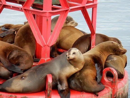 Дана-Пойнт, Калифорния: Sealions on a bouy