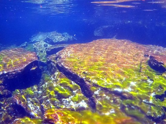 Cenote Jardin del Eden: Unter Wasser