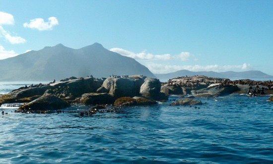 Cape Town Central, Afrika Selatan: les otaries sont bien au rendez-vous