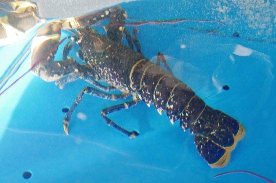 Restaurant la table de jeanne homard bleu selten und teuer