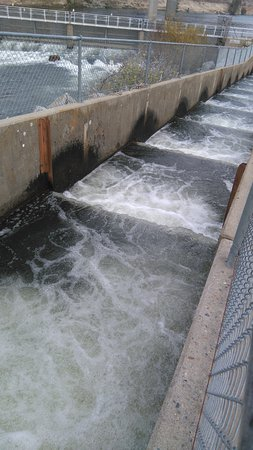 Gold River, Калифорния: The fish ladder