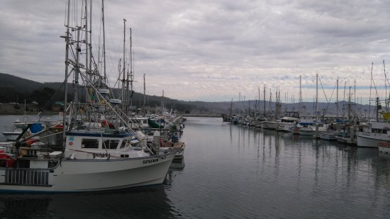 Pillar Point Harbor: It was a cloudy day