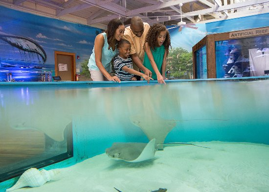 Daytona Beach Area, ฟลอริด้า: Visit the Marine Science Center for a day of fun and learning for all ages