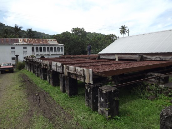 Saint Mark Parish, Grenada: Drying the beans
