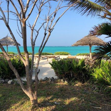 The Zanzibari: photo2.jpg