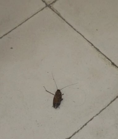 Hotel 1926 : One of many cockroaches...
