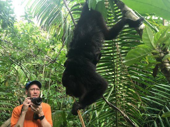 Community Baboon Sanctuary: a howler monkey with two babies