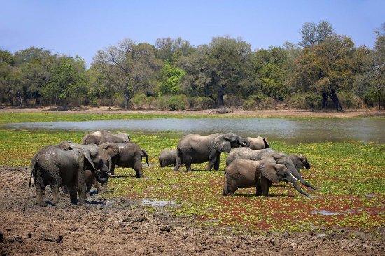 South Luangwa National Park, Zambia: mophy budget  safari  tours