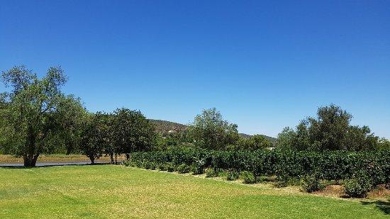 Oudtshoorn, South Africa: 20180126_133050_large.jpg
