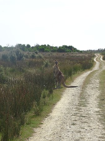 Wilsons Promontory National Park, Australien: easy walk with good chance to see the local wildlife