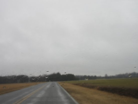 Grasonville, MD: Here is the road within the mashland