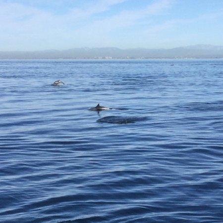 Newport Landing Whale Watching : photo0.jpg
