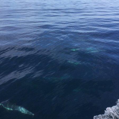 Newport Landing Whale Watching : photo3.jpg