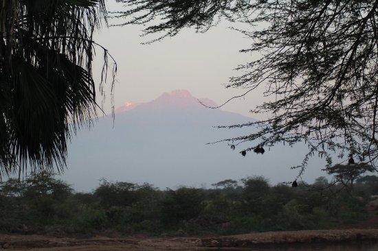 Voyager Ziwani, Tsavo West: IMG_3065_large.jpg
