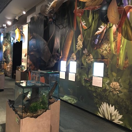 Audubon Butterfly Garden And Insectarium Is It Worth Visiting See What Most Travelers Say