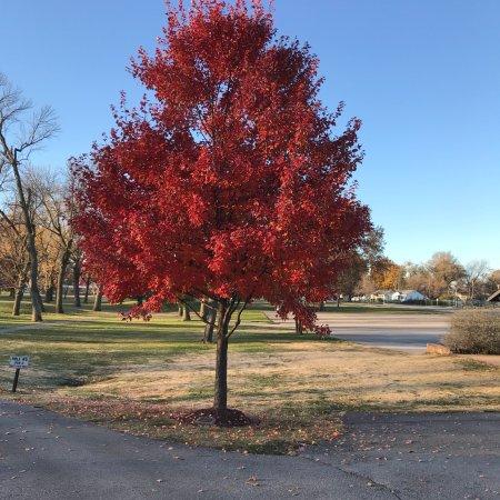 Saint Ann, Миссури: Beautiful nine hole Golf Course near St. Louis International Airport. Easy to walk if you want b