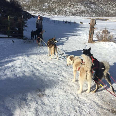 Luna Lobos Dog Sledding Reviews