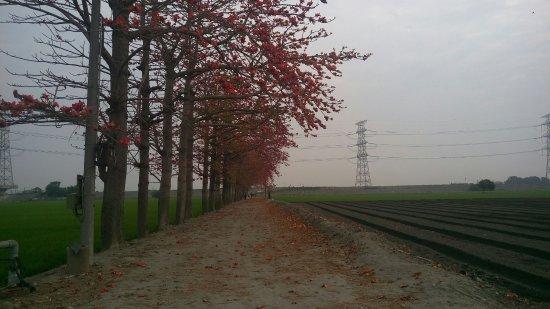 Kapok Road