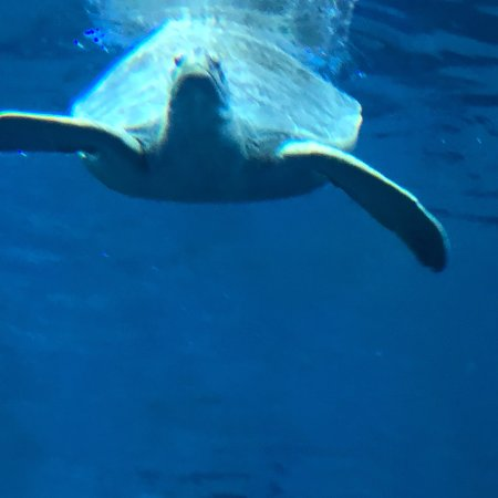 Clearwater Marine Aquarium : photo2.jpg