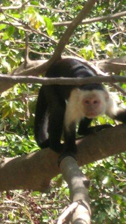TPV Costa Rica: 20180123_103347_large.jpg