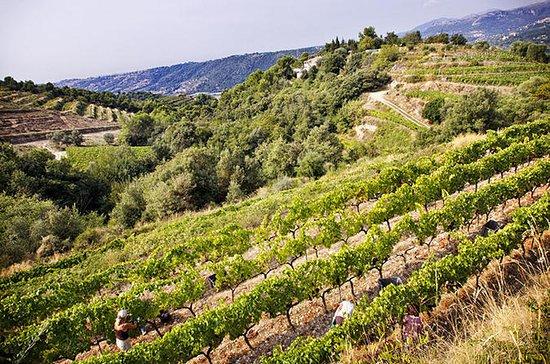 4-Hour Provence Organic Wine Tasting...
