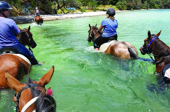2-Hour Beach Horse Ride Experience on...