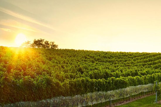 Gran tour del vino en pequeñas...