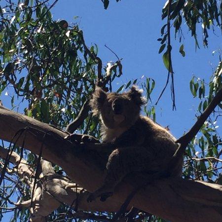 Каус, Австралия: photo0.jpg