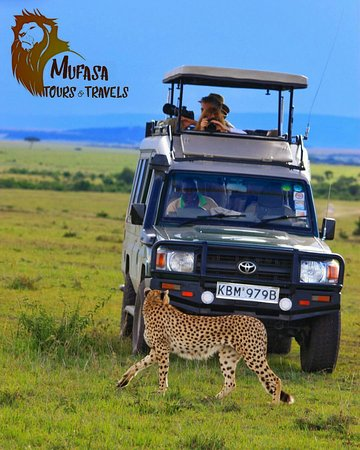 Mufasa Tours and Travels