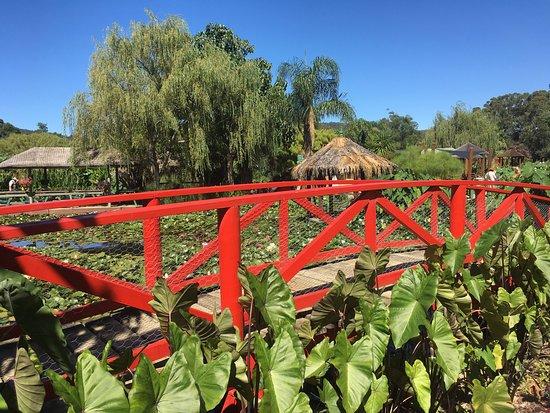Blue lotus water garden yarra junction top tips before for Garden design yarra valley