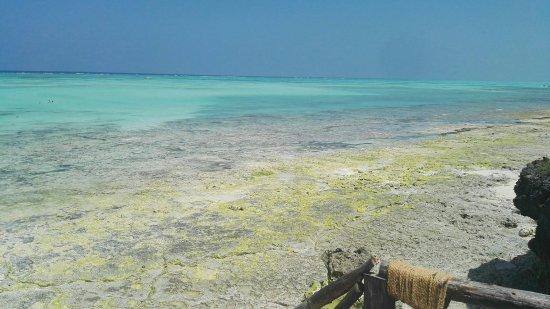 The Zanzibari: IMG_20180125_133425_large.jpg