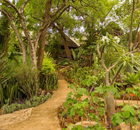 Mafigeni Safari Lodge: Pathway to reception