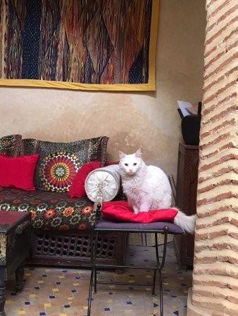 Riad Al Nour: Bonbon !