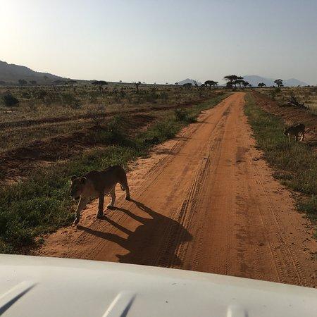 Sunrise Day Tour Safaris Kenya: photo2.jpg