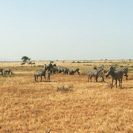 Sunrise Day Tour Safaris Kenya: photo4.jpg