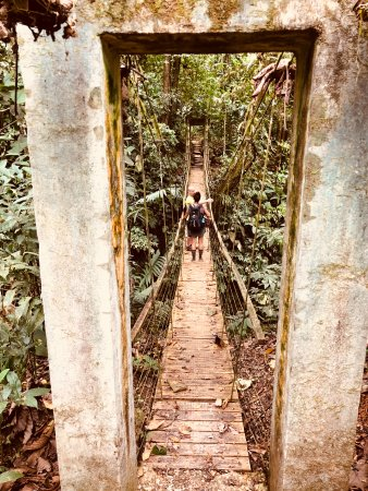 Piedras Blancas, كوستاريكا: Walk from our tree house to the communal areas