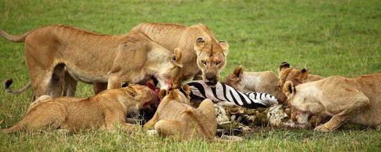 Joica Tours & Safaris