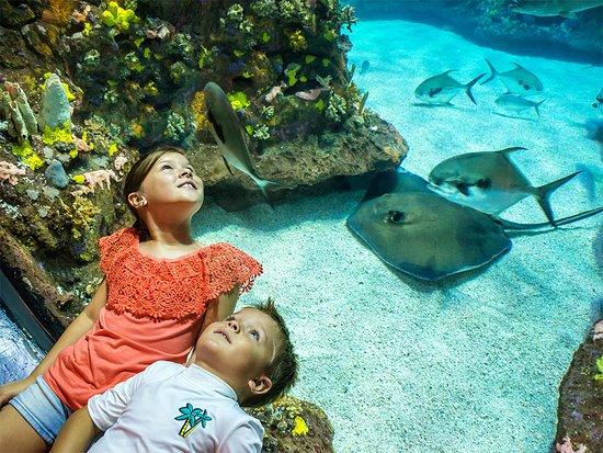 Wilmington Nc Kure Beach Aquarium