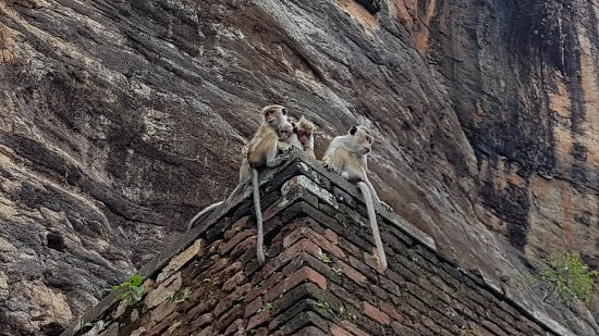 Sri Lanka In Auto
