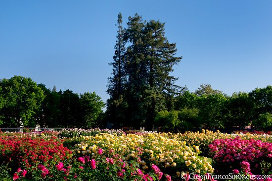 Municipal Rose Garden San Jose All You Need To Know Before You Go With Photos Tripadvisor