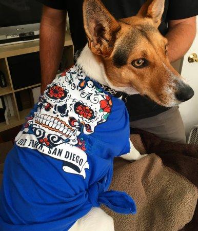 Dog Friendly Hotels San Diego Ca