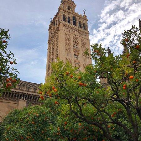 Amigo Tours Seville
