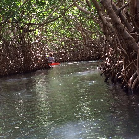 Cades Bay, Antigua: Awesome trip kayaking through mangroves, snorkelling along a coral reef, then enjoying rum punch