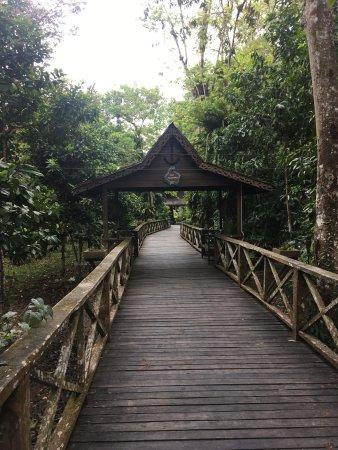 Sukau Rainforest Lodge: photo7.jpg