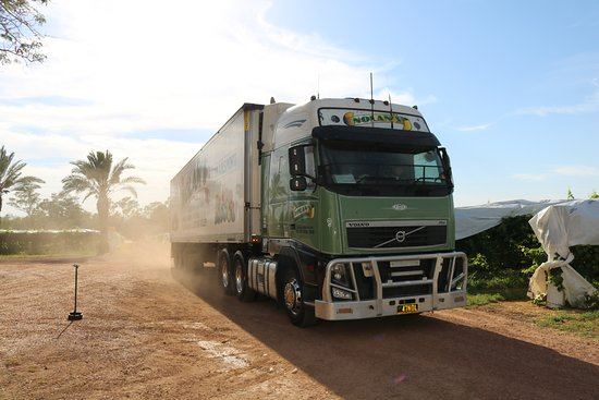 St George, Australia: Nolans truck rolling in to pick up table grapes for market