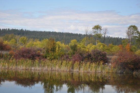 Golden, Canada: Autumn Colours Columbia Lake