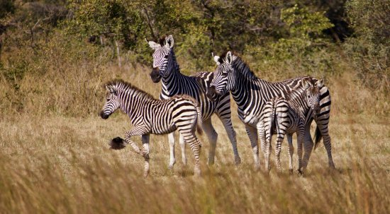 Gweru, Zimbabwe: See animals in their natural habitat at Antelope Park