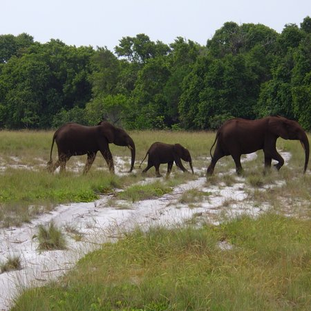 Loango National Park照片