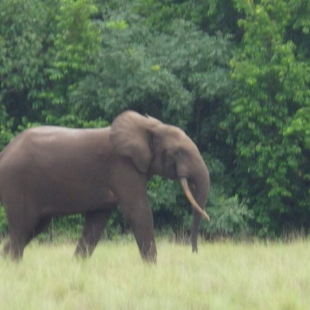 Loango National Park, الجابون: photo4.jpg